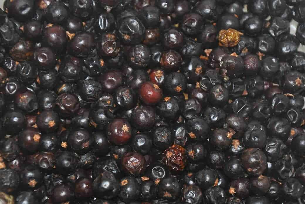 Juniper Berries close up