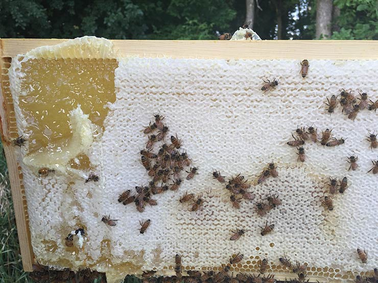 honeycomb from my beehive - beekeeping
