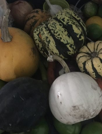 CSA squashes and vegetables