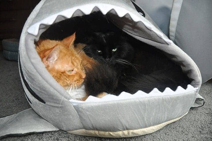 Milo and Hansel... each in a power play for the shark bed.