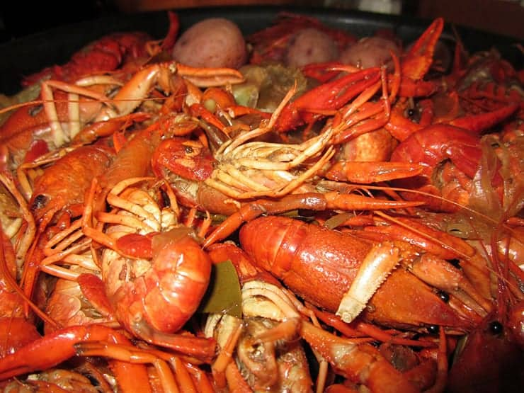 A picture of crawfish that would have been available to the people at the time